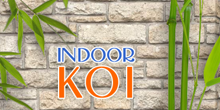 indoor_koi_banner